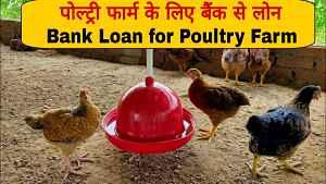 poultry farm loan sbi pnb apply online